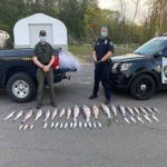 Striped Bass Poachers